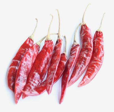 334/S4/SANNAM/S10 Dry Red chilli Exporters from Guntur India