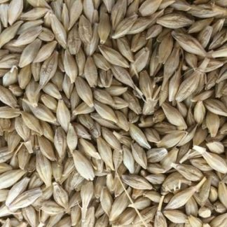 Barley Supplier & Exporters in Guntur, India