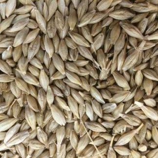 Barley Supplier & Exporters in Guntur, India