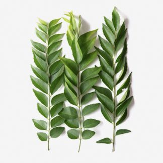 Curry Leaf Supplier & Exporters in Guntur, India