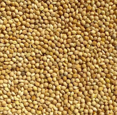Millet Wholesaler, Exporter & Suppliers in Guntur, India