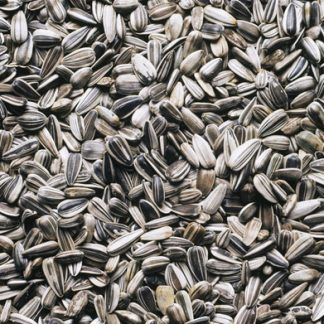 Sunflower Seeds Manufacturers in India